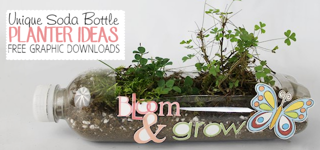 Unique Soda Bottle Planter Ideas FE