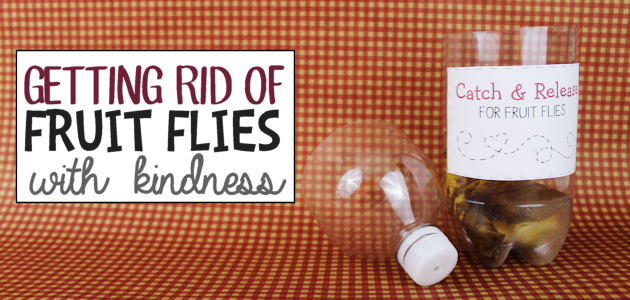 Getting Rid of Fruit Flies with Kindness