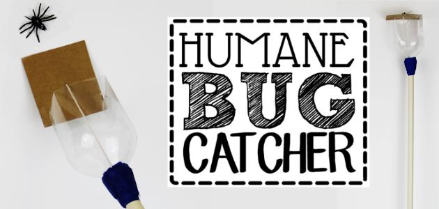 How to Make a Humane Bug Catcher