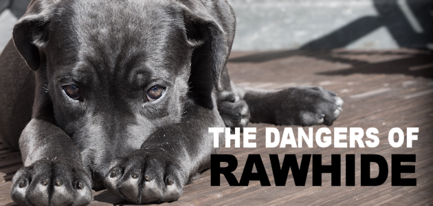 The Dangers of Rawhide for Dogs & Free Safe Treat Sheet
