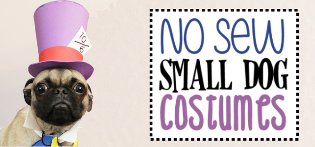 No Sew Small Dog Halloween Costume Ideas & Patterns