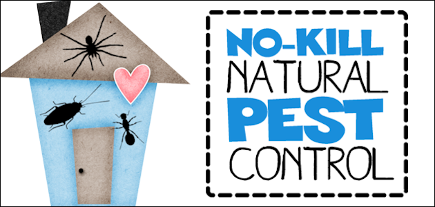 No-Kill Natural Pest Control for Your Home