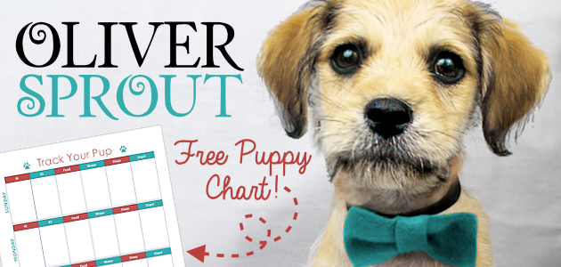 Grab a free potty training puppy chart and read about how a very special puppy named Oliver Sprout found a loving home with the help of the Humane Society.