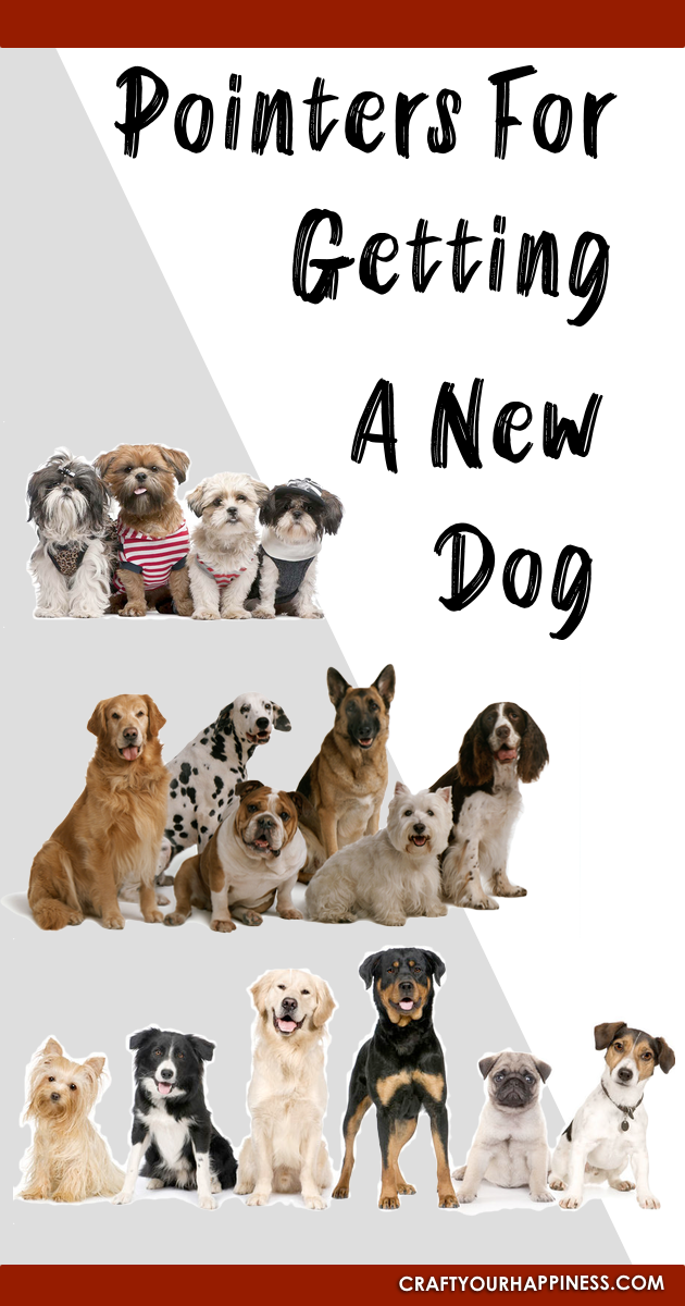 Getting a new dog can often be like considering when to start a family. Use this list of helpful tips to assure you are ready and choose wisely!