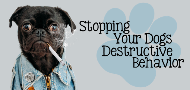 Stop Your Dogs Destructive Behavior
