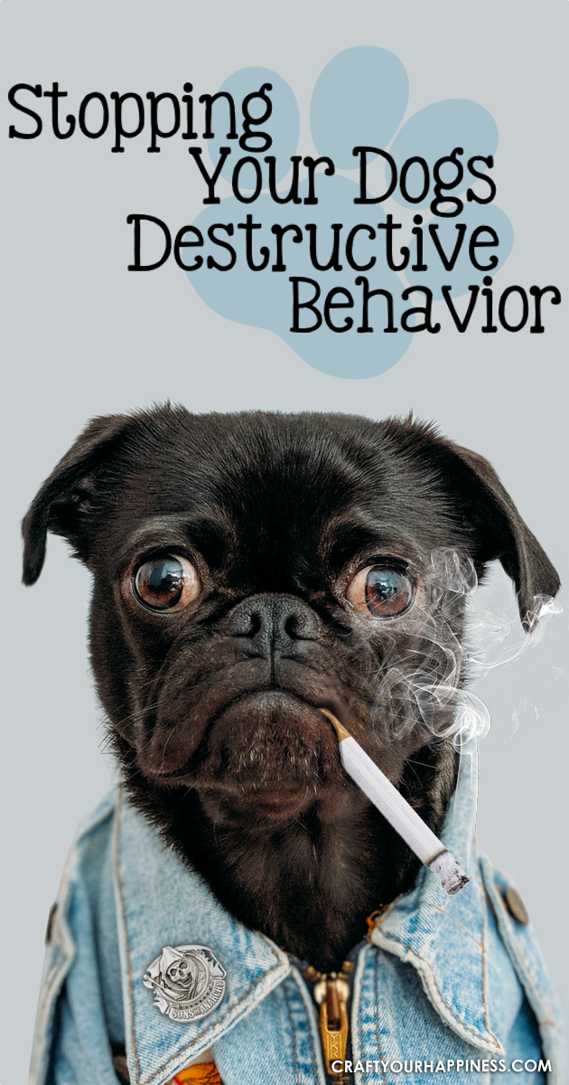 Even the best of dogs can be naughty at times. Check out our tips and ideas on how to Stop Your Dogs Destructive Behavior and what might be causing it.