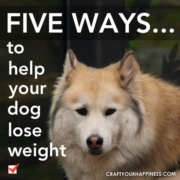 Dog's become overweight for the same reason we do. They eat the wrong foods and they don't move enough. Check out these 5 tips to help your dog lose weight.