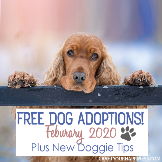 In February 2020 Coors Light is offering to pay for free dog adoptions! Read the details and also get some doggie tips for your new family member.