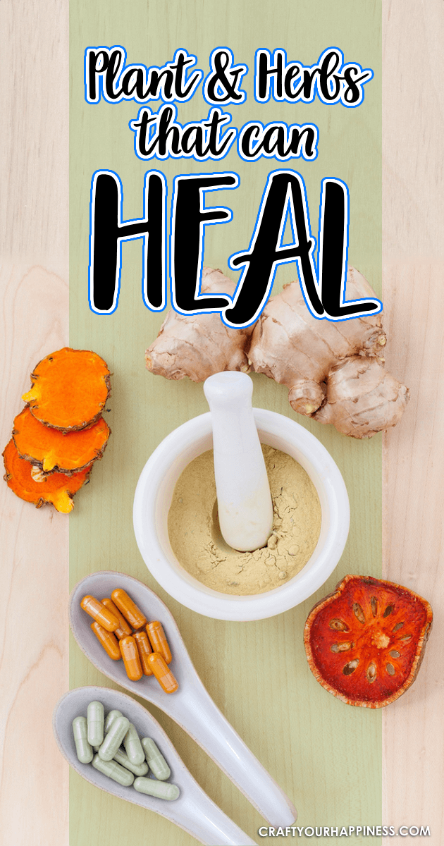 Herbs are amazing and many have the ability to help and even heal many conditions. They are safe and inexpensive. Below are a few herbs that can heal.
