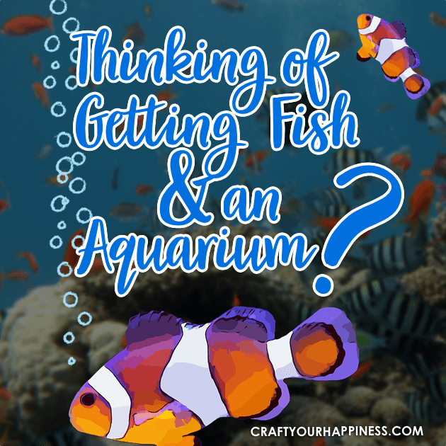 "Despite being ""lower"" maintenance, buying pet fish should be done carefully. Here are some Tips if Your Thinking of Getting Fish and an aquarium."