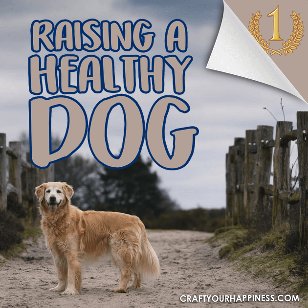 Raising a healthy dog requires some dedicated effort but pays off in the long run. Check out all our wonderful tips to assure your puppy stays healthy!