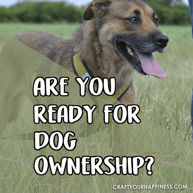 Here are some things to think about along with pointers and tips to help you answer the question Are You Ready For a Dog?